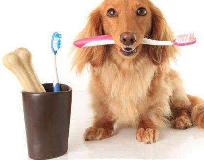 La corretta pulizia dei denti nel cane per denti sani e alito fresco